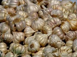 Garlic herb-garden-herbs-that-contains-healing-wonders