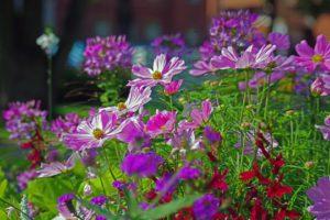 Do It Yourself Landscape Design-garden-flowers