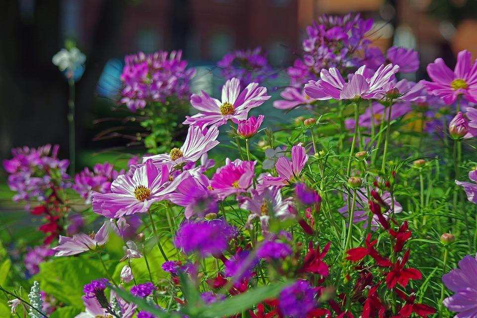 Annuals-garden-flowering-plants