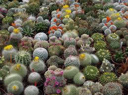 Cactus plants-xeriscaping