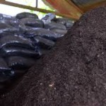 Compost soil-Potting soil vs Garden soil
