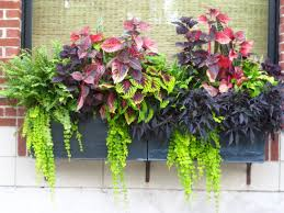 Garden plants in garden window box-container-gardens