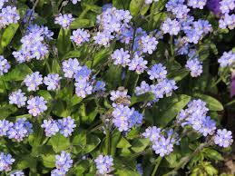 Garden herbs-edible-gardening-design