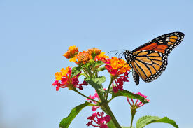 Creating a butterfly garden-Butterfly on flowers