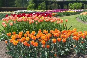 Garden Activities For Seniors-a-garden-design