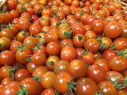 Organic gardening-tomatoes