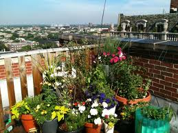 Flowering plants in plant pots on balcony-relaxing-with-gardening
