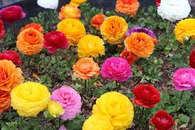 Colorful flowers-starting-your-own-ornamental-pest-control-business