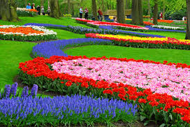 Beautiful colorful flower garden-energy-efficient-garden