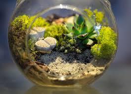 Glass fish bowl garden-fish-terrarium