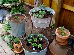 Garden herbs growing in containers-container-gardens