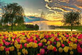 Flowering garden by water fountain-flower-gardens