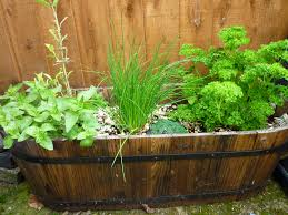 Garden herbs growing in wooden planter-edible-gardening-design