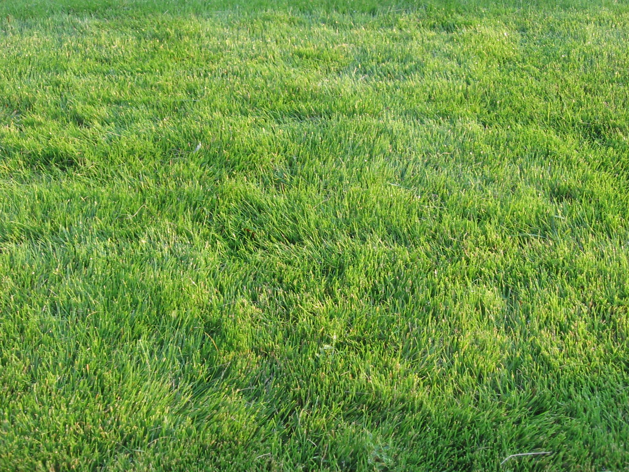 Grass Types Eden S Garden