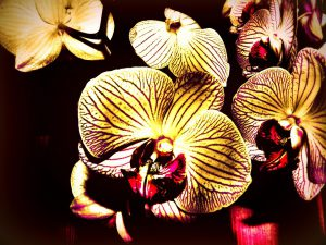 Brown-yellow-red phalaenopsis orchids-orchids-and-their-place-in-the-landscape