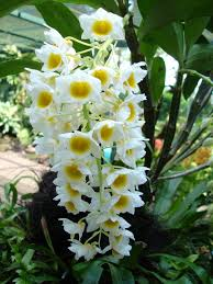 Orchids-pest-control-methods