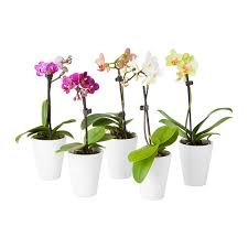 Orchids-Bromelaids-Croton plantOrchids-Bromelaids-Croton plant-starting-a-interior-plantscape-business