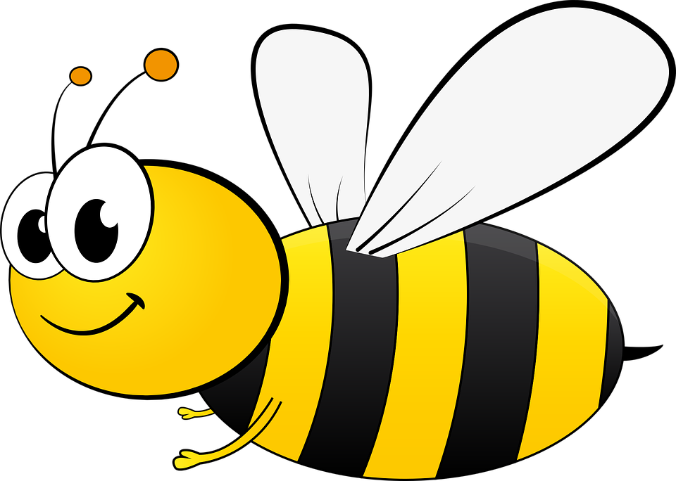 Bumble-bee-insect body parts and functions