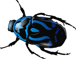 Beetle-just-for-kids-gardening-and-insect-adventure