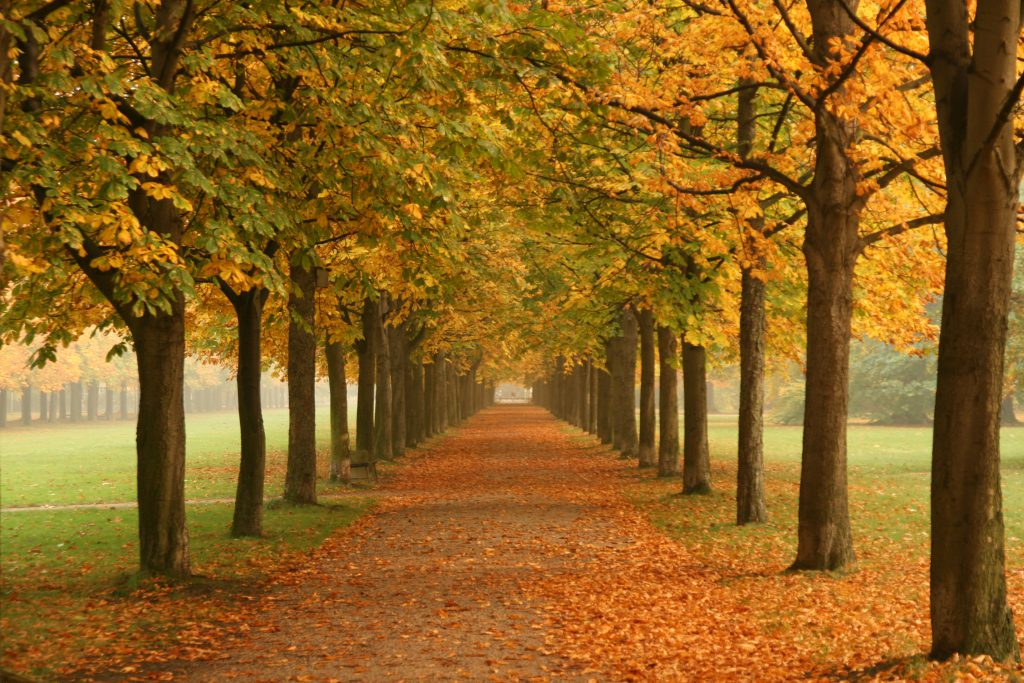 Walking path with trees-tree-uses-and-benefits