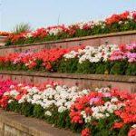 Brick raised beds with garden flowers-raised-bed-gardening-ideas