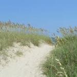 Sea oats-salt-tolerant-plant-list
