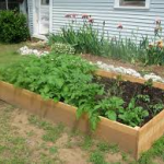 Raised bed with vegetables-raised-bed-gardening-ideas