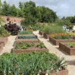 Raised beds in rows with garden plants-raised-bed-gardening-ideas