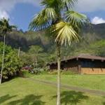 Thatch palm-salt-tolerant-plant-list