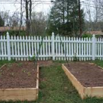 Two raised bed box in fence in yard-raised-bed-gardening-ideas