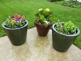 Potted plants-house-plant-food
