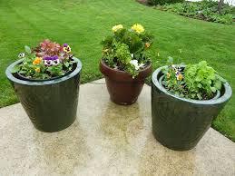 Plants in garden pots-biennials