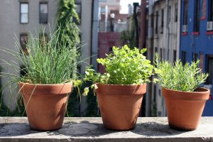 Herbs growing in plant pots-urban-garden-support