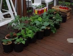 Herbs in groups-growing-herbs