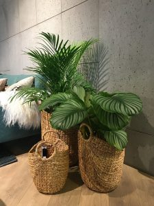 indoor plants-insects-and-interior-plants