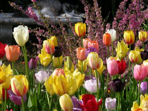 Garden flowering plants-chemical-application