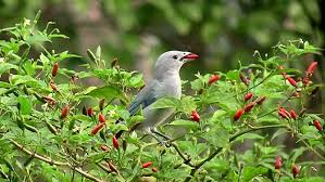 Bird in tree eating peppers-how-to-attract-pollinators-to-your-garden
