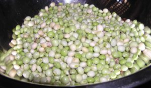 Pigeon peas-Peas growing guide
