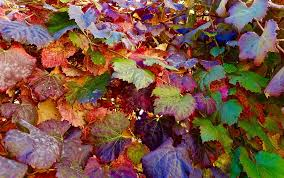 Leaves-what-causes-garden-plants-leaf-drop