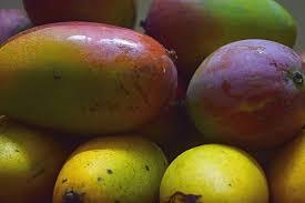 Sweet mangoes-health-benefits-of-mango