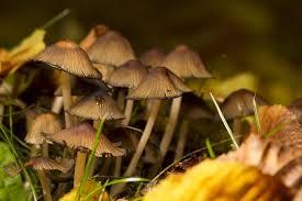 Fungus-fungicides