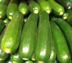 Green zucchini-growing-zucchini-plants