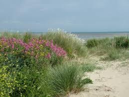 Seaside garden design-seaside-gardening