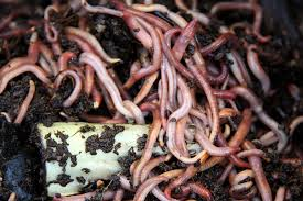 how-to-harvest-worm-casting-for-your-garden-worms enhancing soil texture