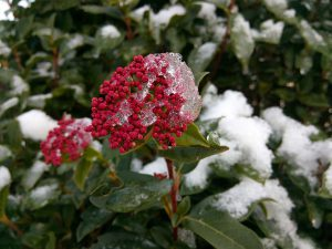 Winter plant-how-to-grow-a-winter-garden