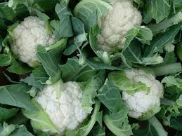 Cauliflowers-growing-cauliflower-plants