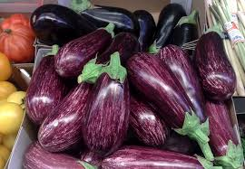 Light- dark purple eggplant-growing-eggplants