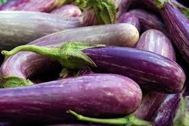 Purple eggplant-growing-eggplants