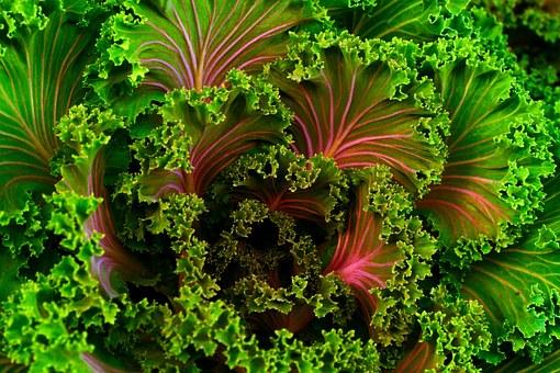Garden Veggie-planting-a-spring-garden