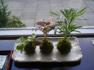 Plants on table-how-to-make-a-kokedama-hanging-garden